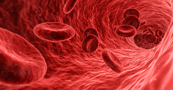 blood stream with red blood cells