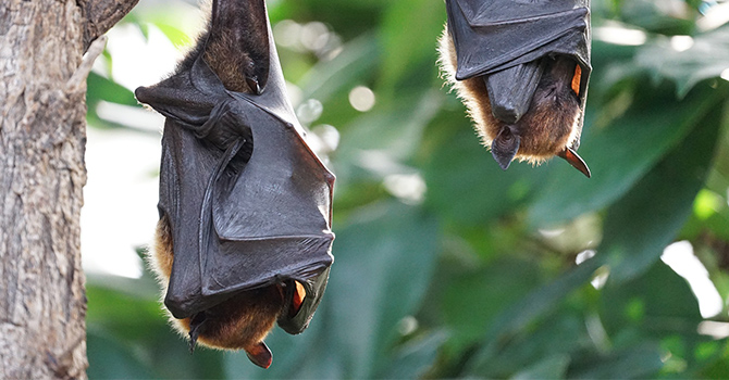 bats hanging upside down during the day