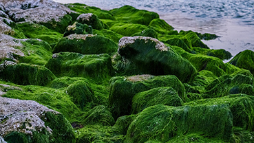 You Might Be Inhaling Bits of Toxic Algae