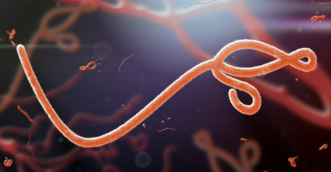 Microscopic image of the Ebola virus